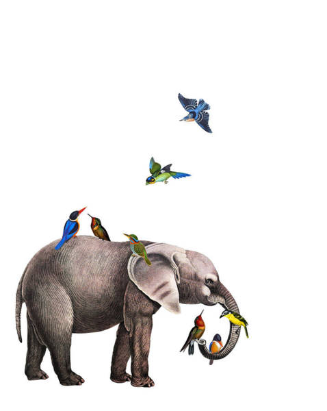 Wall Art - Digital Art - Elephant With Birds Illustration by Madame Memento