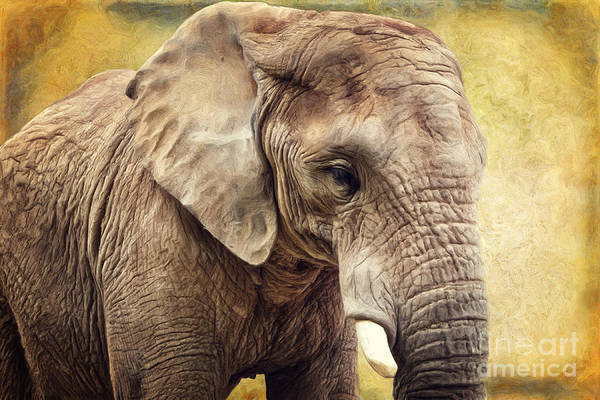 Wall Art - Digital Art - Elephant by Angela Doelling AD DESIGN Photo and PhotoArt