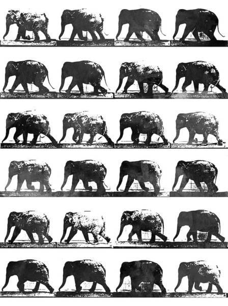 Wall Art - Digital Art - Elephant Animal Locomotion - Bw by Aged Pixel