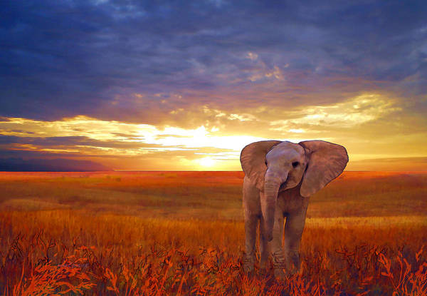 Painting - Elephant Baby by Valerie Anne Kelly