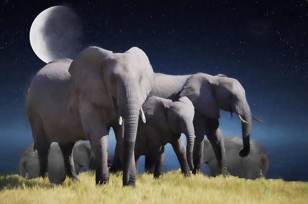 Photograph - Elephant Bath Time Painting by Ericamaxine Price