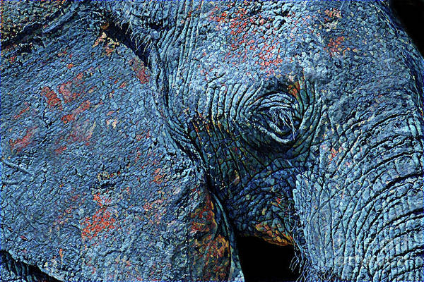 Photograph - Elephant Blues by Chris Scroggins