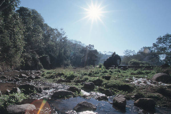 Photograph - Elephant By The Jungle River by Kim Lessel