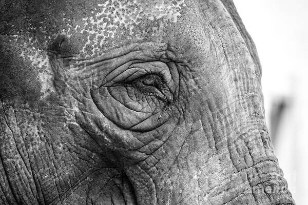 Photograph - Elephant by Clare Bambers
