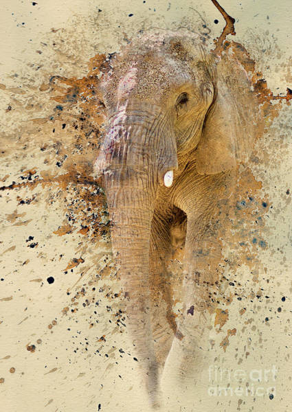 Photograph - Elephant Color Splash by Pam  Holdsworth