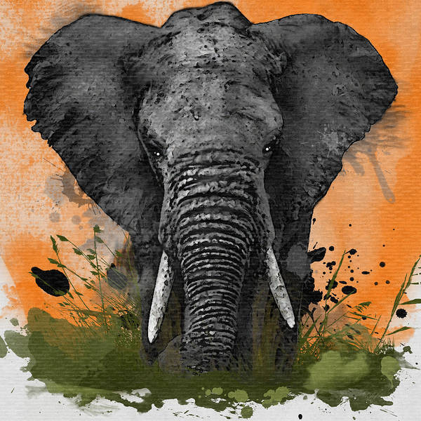 Grand Rapids Painting - Elephant  by David Oakley