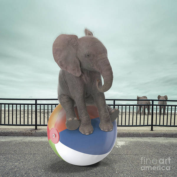 Wall Art - Photograph - Elephant Day At The Beach Surreal by Edward Fielding
