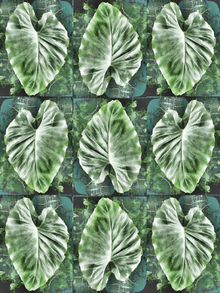 Photograph - Elephant Ear Leaves Taro Plant by Denise Beverly