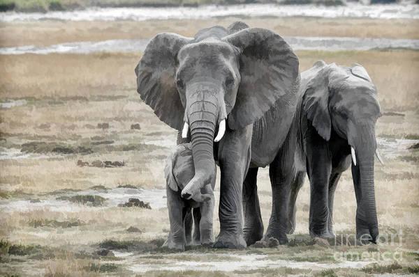 East Africa Digital Art - Elephant Family by Mary Fletcher