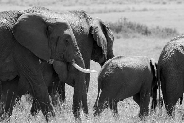 Photograph - Elephant Herd by Aidan Moran