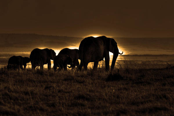 Photograph - Elephant Herd On The Masai Mara by Aidan Moran