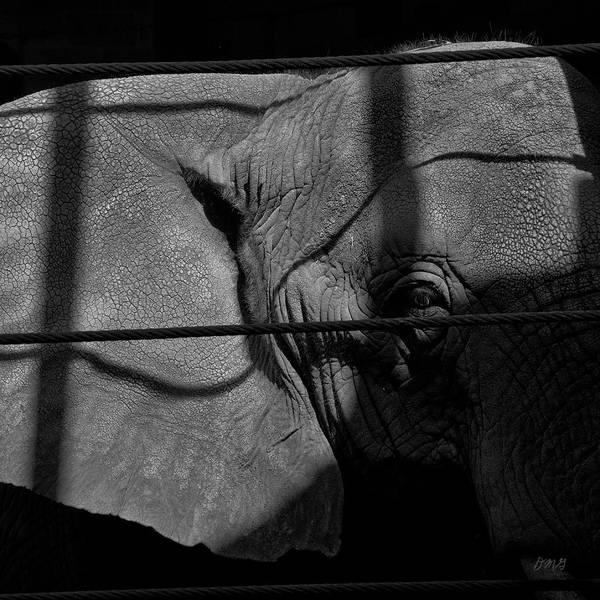 Photograph - Elephant I Bw Sq by David Gordon