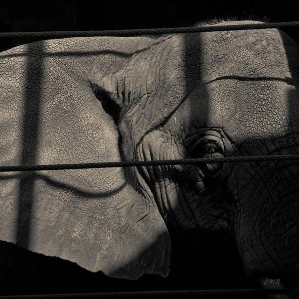 Photograph - Elephant I Toned Sq by David Gordon