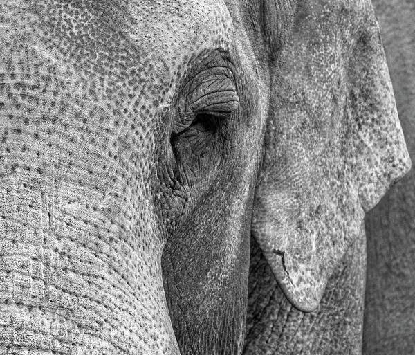 Photograph - Elephant II by Rand