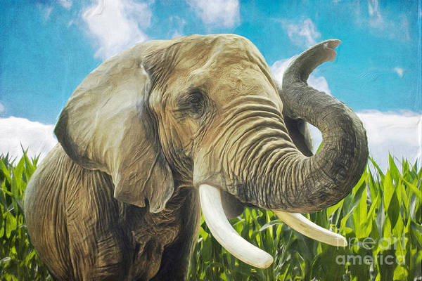 Digital Art - Elephant In The Cornfield by Angela Doelling AD DESIGN Photo and PhotoArt