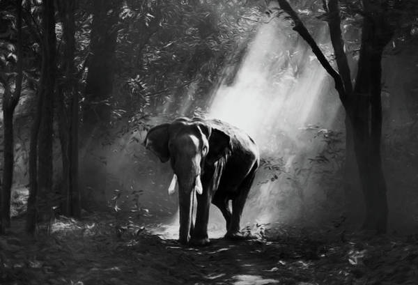 Wild Life Mixed Media - Elephant In The Heat Of The Sun Black And White by Isabella Howard