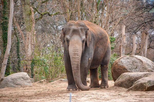 Photograph - Elephant by Ingrid Dendievel
