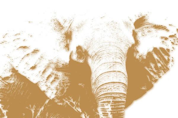 Kruger Photograph - Elephant by Joe Hamilton