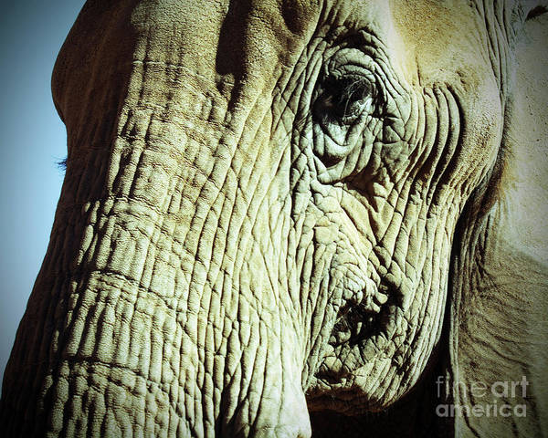 Photograph - Elephant by Kelly Holm