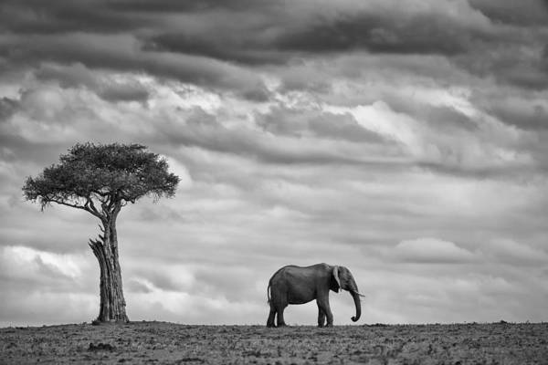 Cloudy Photograph - Elephant Landscape by Mario Moreno