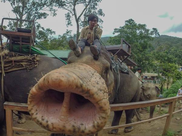 Chang Mai Wall Art - Photograph - Elephant Nose by Megan Martens