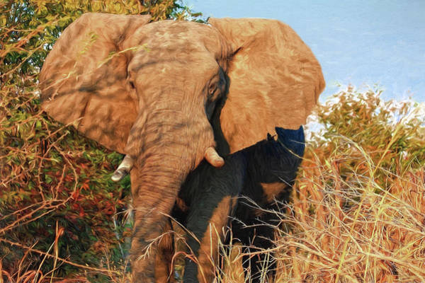Photograph - Elephant On Approach by Kay Brewer