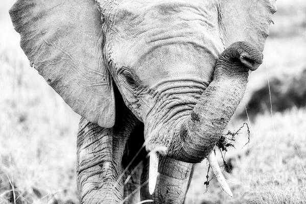 Wall Art - Photograph - Elephant Portrait In Black And White by Jane Rix