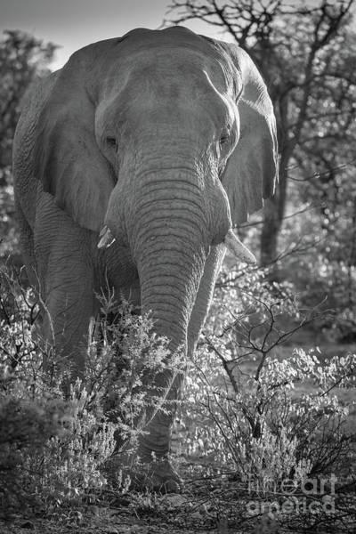 Wildlife Sanctuary Photograph - Elephant Portrait by Inge Johnsson