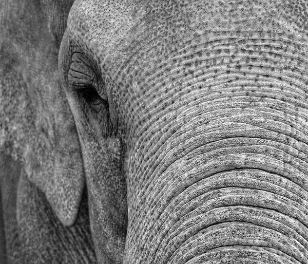 Photograph - Elephant  by Rand