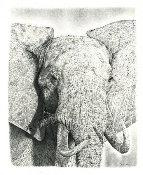 Eye Drawing - Elephant by Remrov