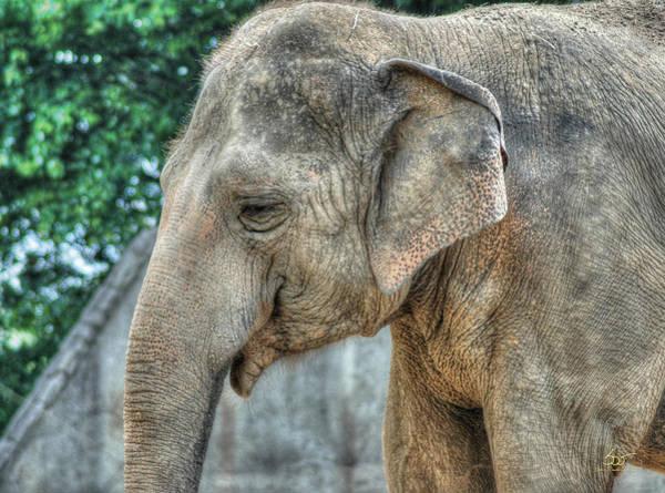 Photograph - Elephant by Sam Davis Johnson