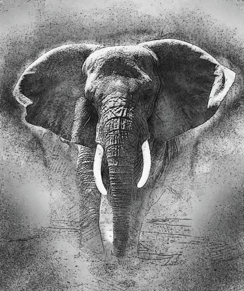 Wall Art - Painting - Elephant Sketch B/w by Jack Zulli