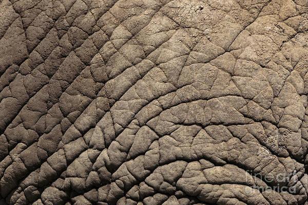 Crevice Photograph - Elephant Skin Background by Edward Fielding