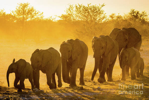 Nps Wall Art - Photograph - Elephant Sunset by Inge Johnsson
