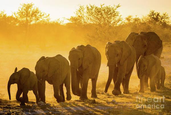 Wildlife Sanctuary Photograph - Elephant Sunset by Inge Johnsson