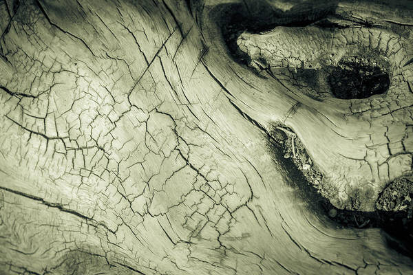 Photograph - Elephant Wood Of Age by John Williams