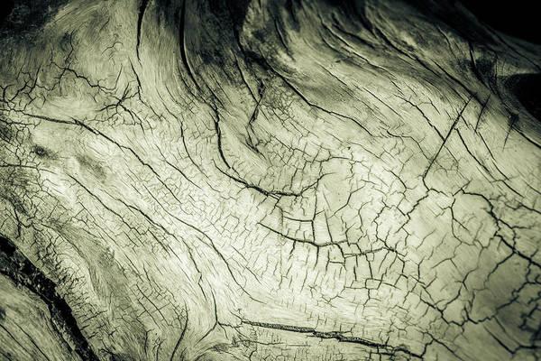 Photograph - Elephant Wood Of Memory by John Williams