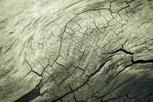 Photograph - Elephant Wood Of Smoothness by John Williams