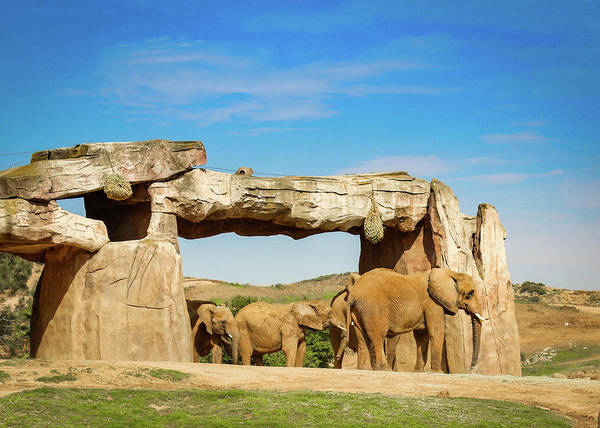 Photograph - Elephants by Alison Frank