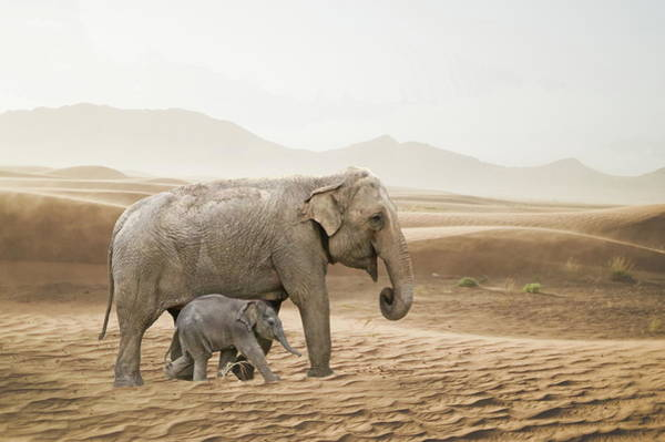 Photograph - Elephants  by Andrea Kollo