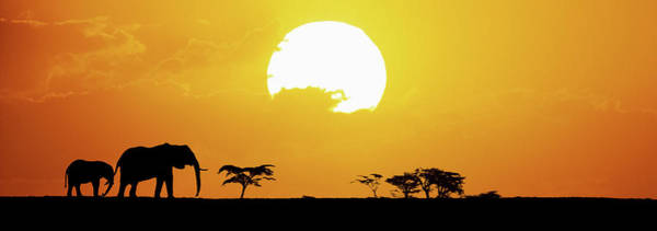 Tarangire Photograph - Elephants At Sunset by Tim Booth