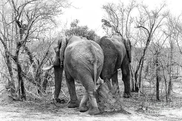 Wall Art - Photograph - Elephants Black And White by Jane Rix