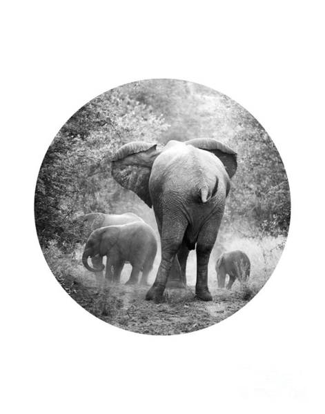 Wall Art - Photograph - Elephants by Delphimages Photo Creations