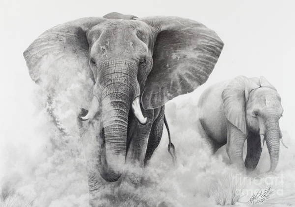 Dust Drawing - Elephants In The Dust by Stephen McCall