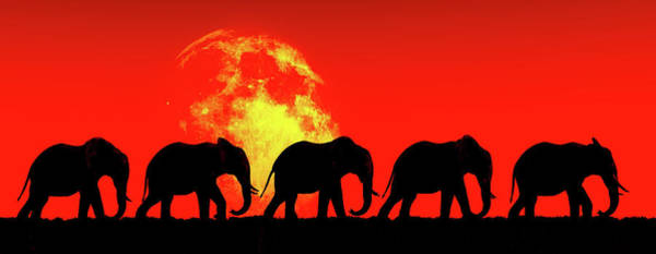 Elephants Walk In The Red Sky Art Print