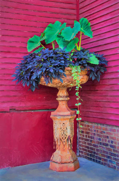 Photograph - Elevated Basket Of Plants In The Corner by Gary Slawsky