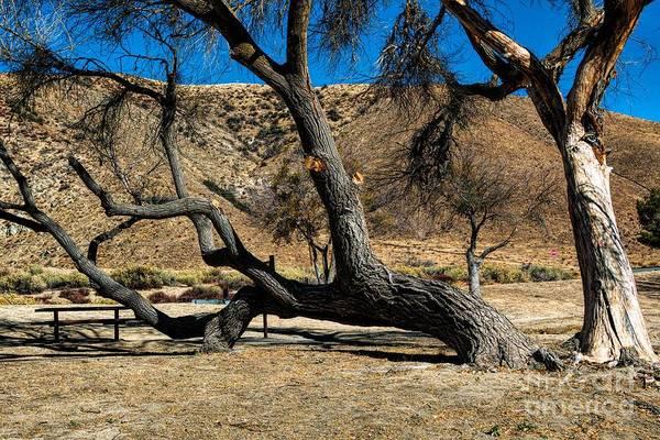 Photograph - Elizabeth Lake Tree by Joe Lach