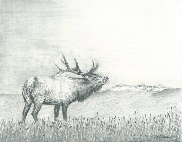 Elk Mountain Drawing - Elk And The Flattops by Sarah Bevard