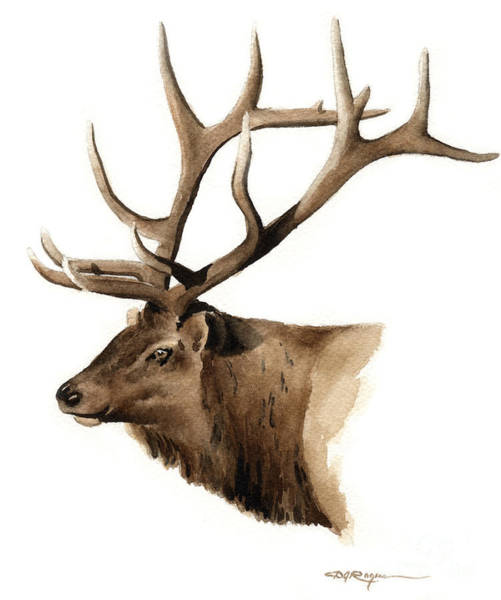Whitetail Wall Art - Painting - Elk by David Rogers