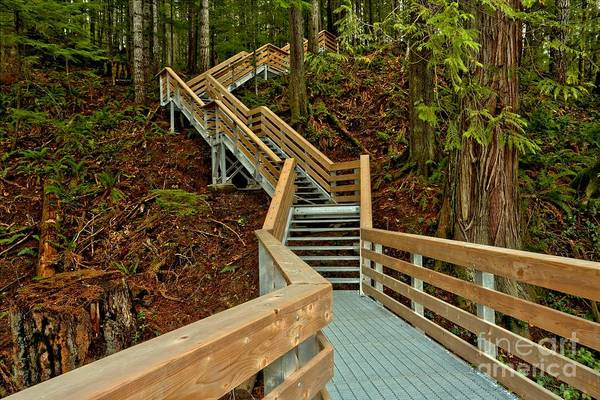 Photograph - Elk Falls Boardwalk Trail by Adam Jewell